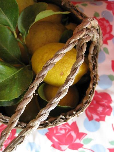 Oct 8 2008 Lemonade etc003