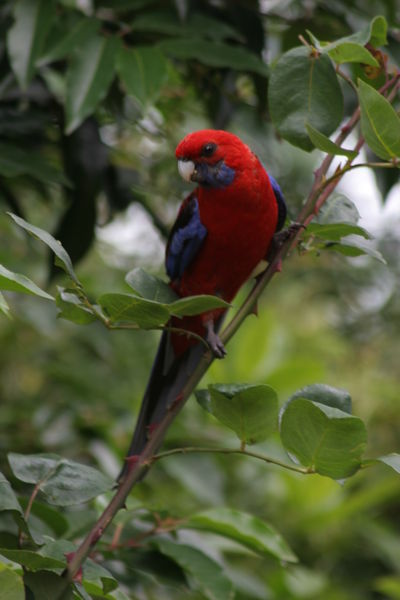 Dec 31st 2008 Birds and Raspberries119